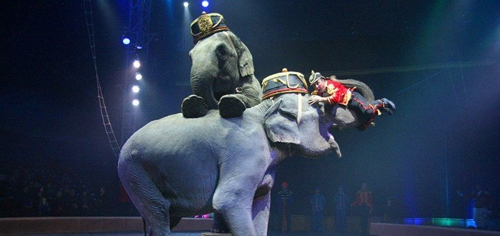 """Невероятное предложение! Билеты в цирк """"Кобзов"""" в комплексе с выставкой!"""