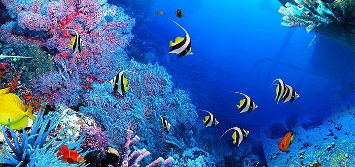 Разовое погружение и пробное занятие для одного или двоих, а также полный курс Diver CMAS от Submarine Club!