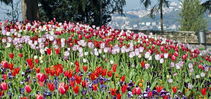 Экскурсионный тур «Week-end в Стамбуле» в период фестиваля тюльпанов по акционной цене от турагентства «Lotos Travel»