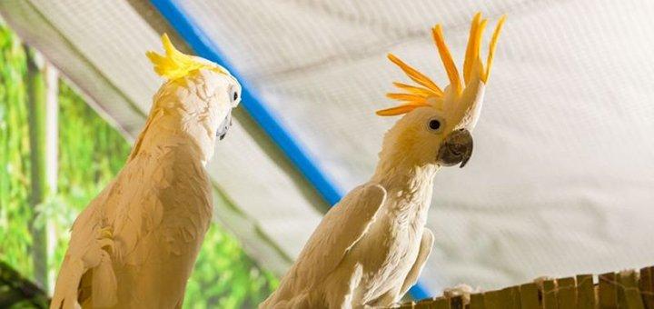 Скидка 55% на билеты в зоопарк «EKZOland»