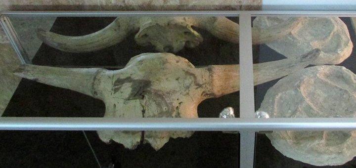 Входные билеты на выставку окаменелостей и кристаллов в павильоне «Наука» на ВДНХ
