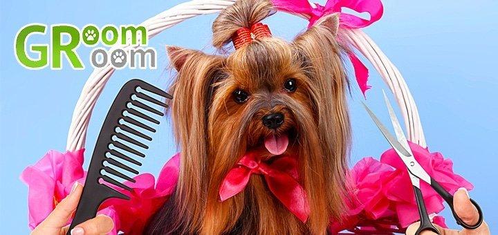 Комплексный уход за собаками малых пород в салоне «GroomRoom»