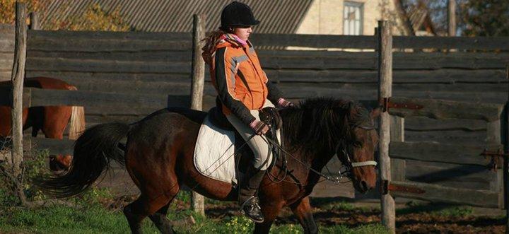 Скидка до 55% на прогулки на лошадях или занятия по верховой езде в конюшне «Идиллия»