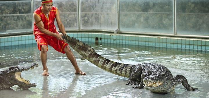 Скидка до 40% на экскурсии в Паттайе на крокодиловую и змеиную ферму