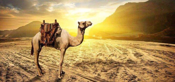 Скидка до 40% на Арабское Сафари