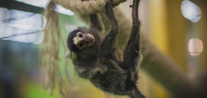 Билеты в любой день на посещение контактного зоопарка «Зверополис»