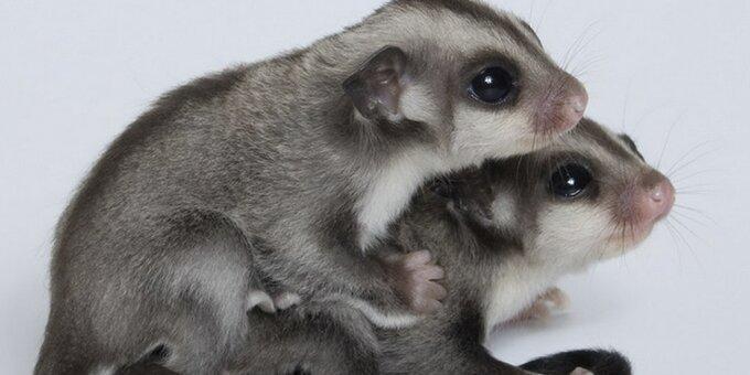 Скидка 50% на 2 билета на выставку животных «Трогательный зоопарк»