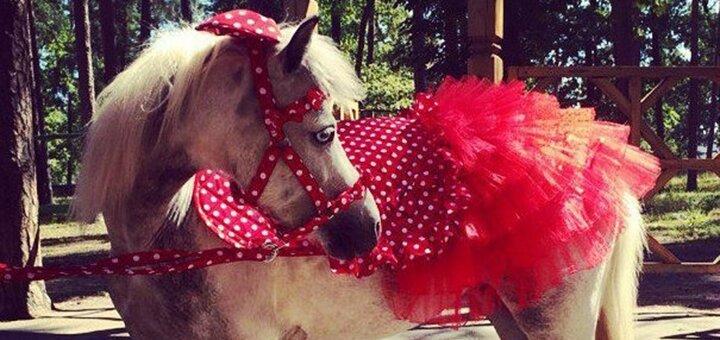 Скидка 42% на выезд лошади, пони или пони с маратоном на праздничные мероприятия от «ЦарSky»