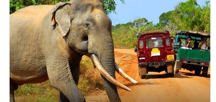 Скидка до 1000 грн на тур на Шри Ланку от ТУР БЕЗ