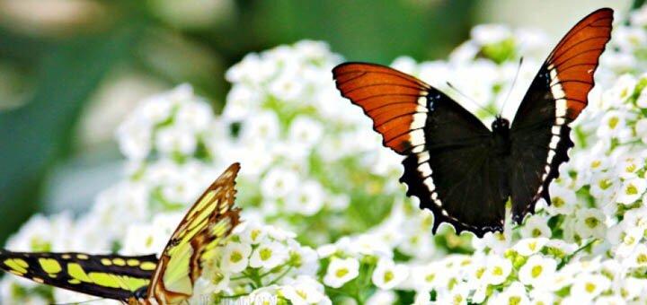 Скидка 50% на два билета на выставку живых бабочек и других насекомых