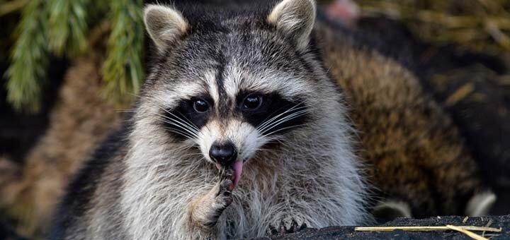 Скидка 50% на билеты в контактный зоопарк «Страна ЕНОТиЯ»