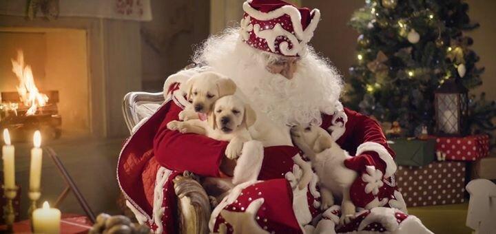 Именное видеопоздравление от Деда Мороза от компании «Morozko.tv»