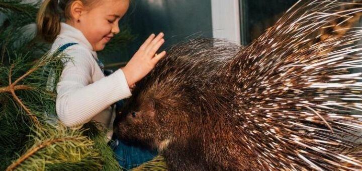 Скидка 50% на билеты в контактный зоопарк «Дом енота»