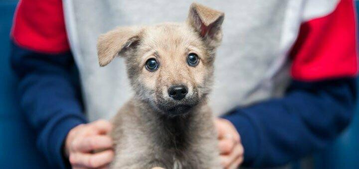 Подарите немного радости животным вместе с фондом «Happy Paw»