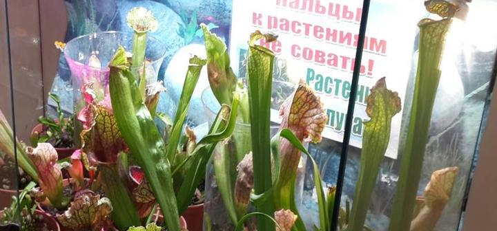 Скидка 50% на билеты на посещение выставки «Растения-хищники и обитатели джунглей»