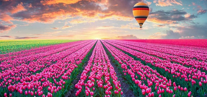 Скидка 20% на полет над тюльпанами Добропарка на воздушном шаре от «Монгольфьер»