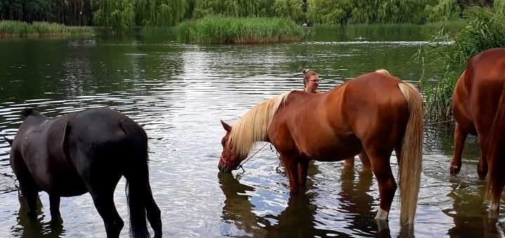 Скидка 45% на прогулку на лошади в конном клубе «Мечта»