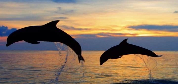 До 50% скидки на абонементы по занятию йогой на Чёрном Море в августе