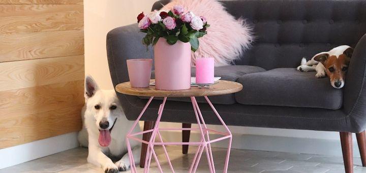 Комплексный уход за собаками малых пород в груминг салоне «Barber Pet»