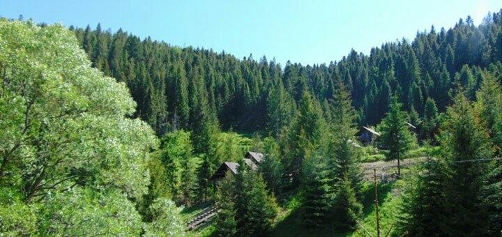 Тур «Выходные в Карпатах» от туристической компании «Miracle Travels»