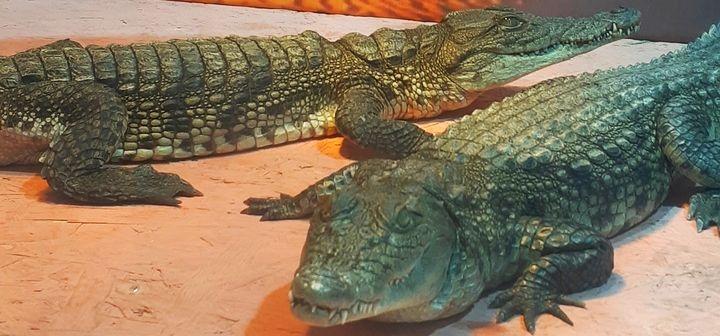 Скидка 50% на билеты на посещение выставки «Крокодиловая ферма»