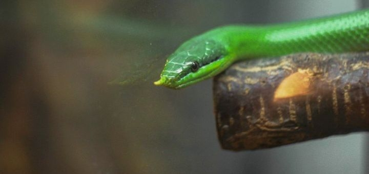 Скидка 50% на билеты на посещение выставки экзотических животных «Зоомир»