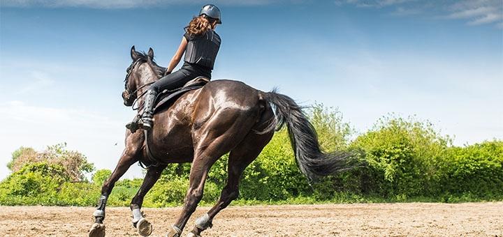 Скидка до 55% на уроки верховой езды от конного клуба «Iron Horse»