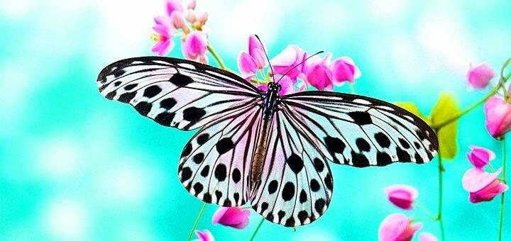 Скидка 50% на билеты на выставку живых бабочек и других насекомых в ТРЦ «Аладдин»