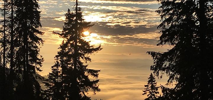 От 5 дней в декабре и марте с питанием в отеле «Alpine Eco Chalet & Wellness» в Драгобрате