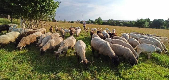 Скидка 50% на два билета на посещение фермы «Добре діло»