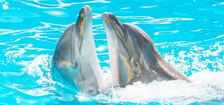 Скидка 50% на представление «Единая Планета» и шоу «Love» в дельфинарии «Немо»