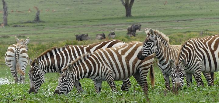 Скидка 4000 грн на тур в Кению с прямым перелетом из Киева от агентства «Абикуди»